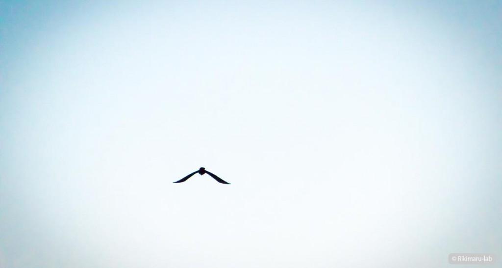リキマルラボ|鳥飛翔