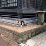 佐倉城址の猫
