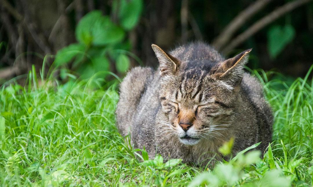 江戸東京たてもの園の猫
