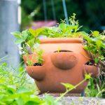 諏訪大社の近くで見つけた鉢植え