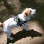 岩櫃城で出会った犬