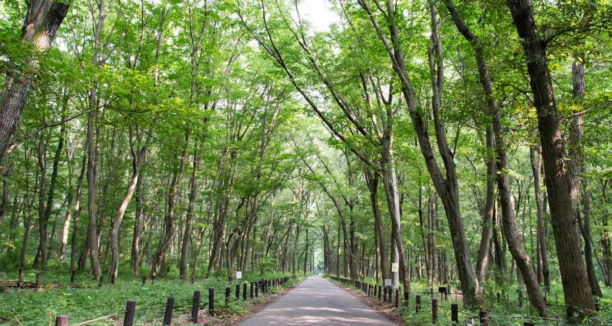 木もれびの森(神奈川県相模原市)