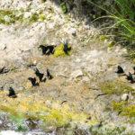 角間渓谷(長野県)|せせらぎの近くで羽根を休める蝶