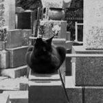 墓場の猫|リキマルラボ