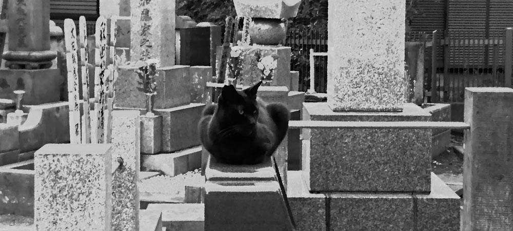 墓場の猫 リキマルラボ