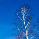 長野の11月|リキマルラボ