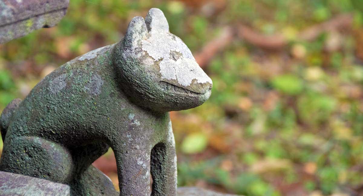 長野 11月の狐|リキラボライムス