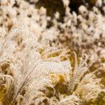 枯れススキと空っ風|リキマルラボ