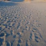 砂丘にて|リキマルラボ
