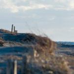 冬の砂丘にて|リキラボタイムス