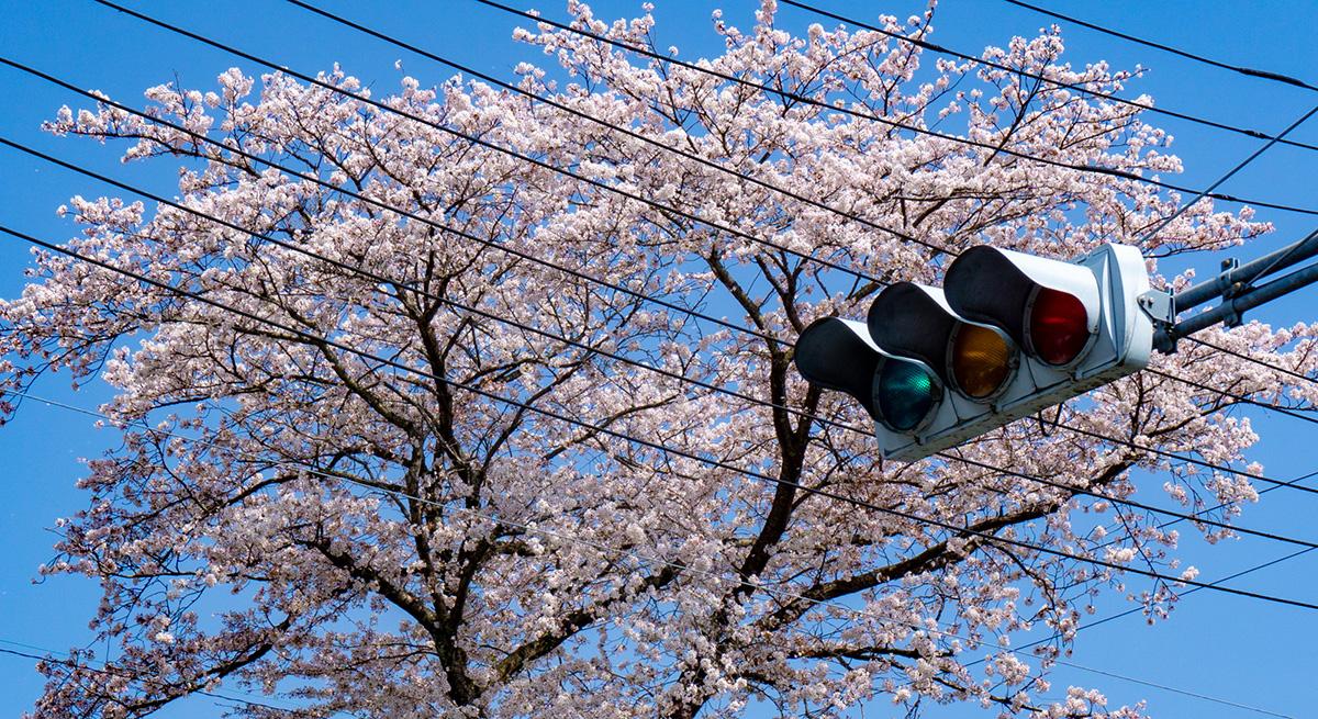 蘇我の春|リキマルラボ