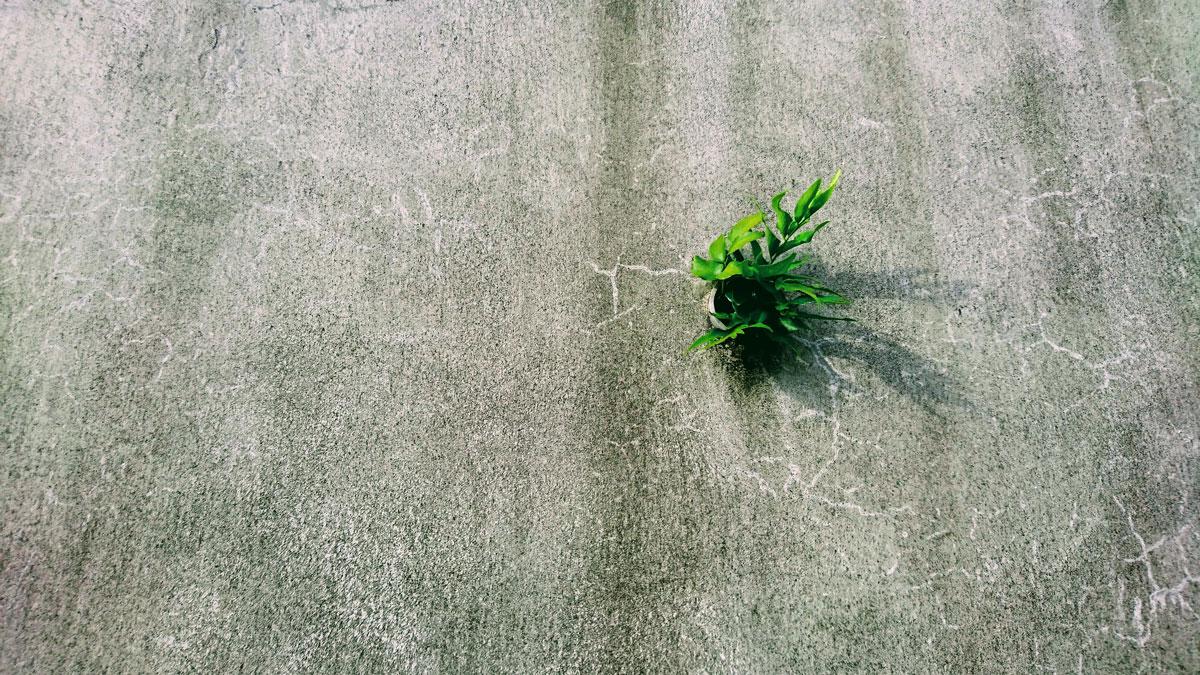 コンクリート壁の草|リキラボタイムス